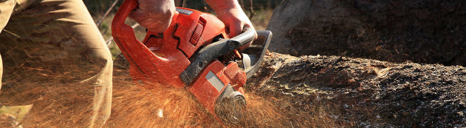 Felling a tree with a chainsaw in Haverfordwest